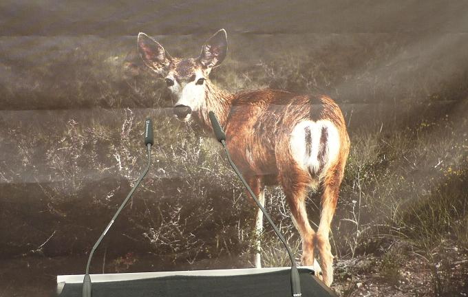bambi rede.JPG